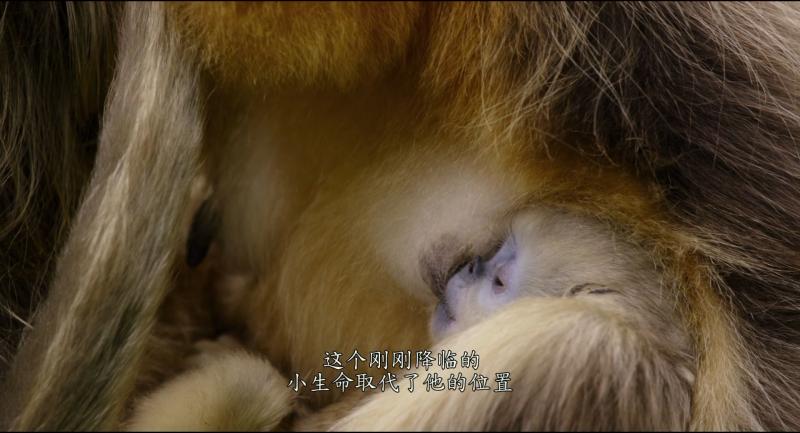 我们诞生在中国.Born.in.China.2016.1080P.X264