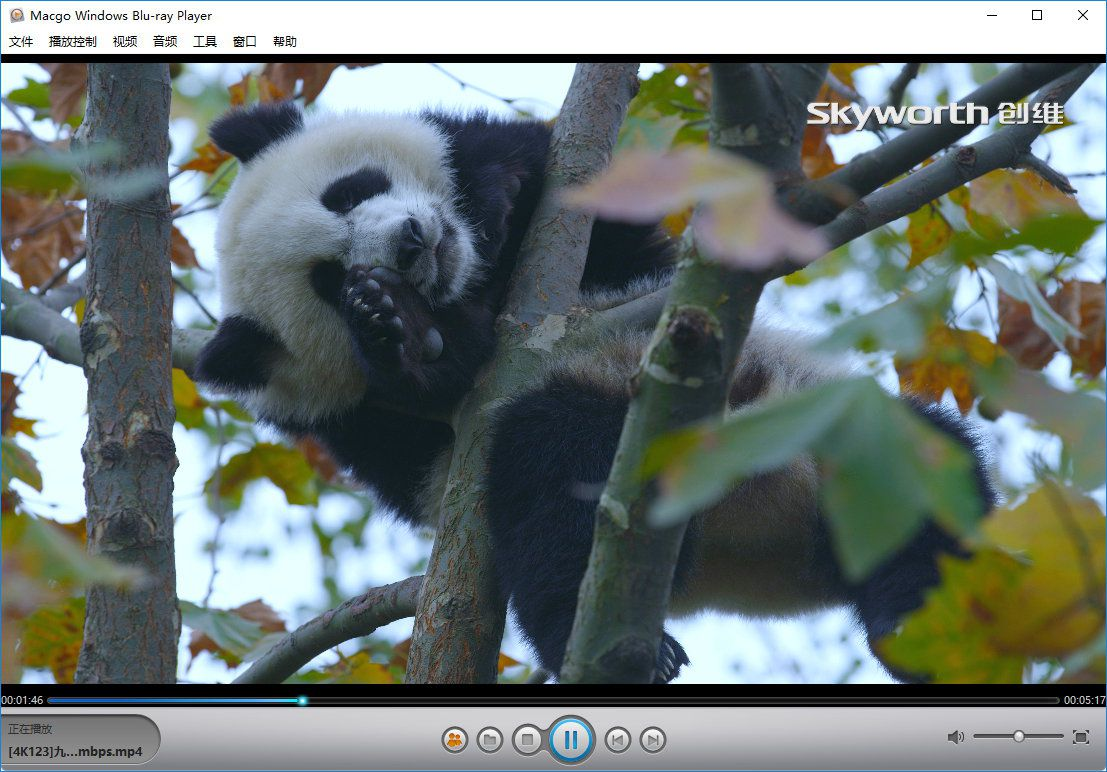 Mac Blu-ray Player for Windows 2.17.2.2614 多语言中文注册版